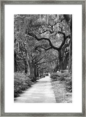 Walking Through The Park In Black And White Framed Print by Suzanne Gaff