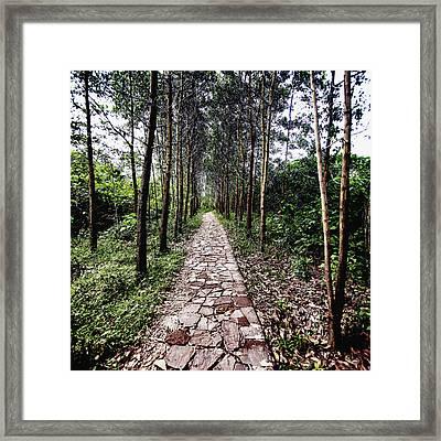 Stone Path Framed Print by Skip Nall