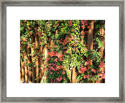 Wall Of Beauty Framed Print