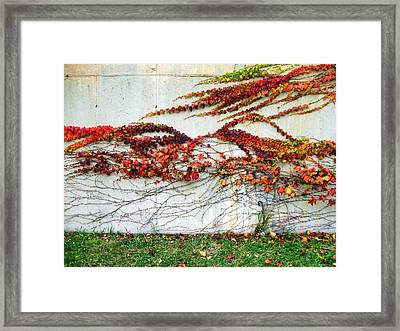 Wall Of Fall Framed Print by Todd Sherlock