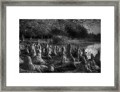 Walrus Beach Framed Print by Debra and Dave Vanderlaan