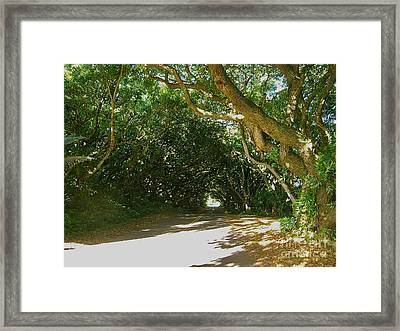 Wandering Road Framed Print