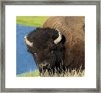 Wanna Fight Framed Print by Paul Cannon