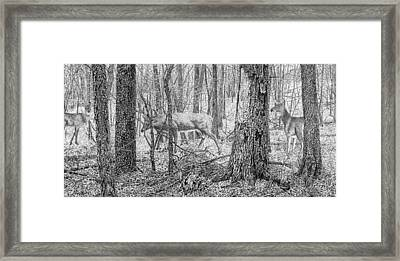 Wapsi Whitetails Framed Print by Craig Carlson