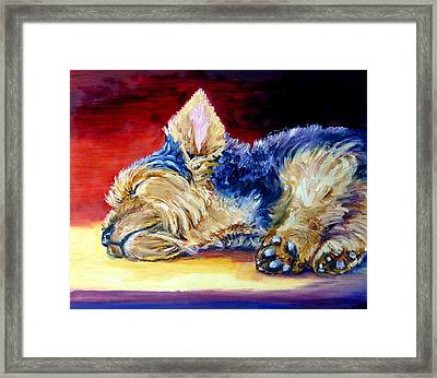 Warm Spot - Yorkshire Terrier Framed Print by Lyn Cook