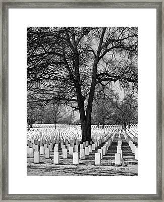 Warmth Under The Snow Framed Print