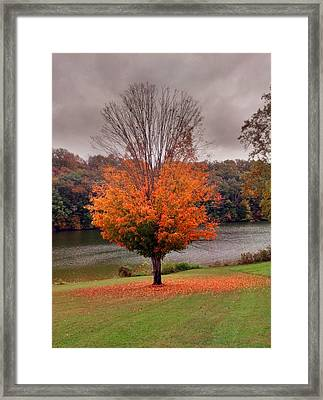 Warrior Path State Park Framed Print by Janice Spivey