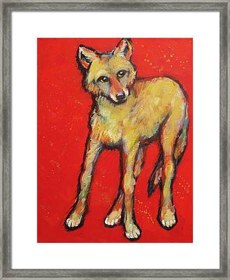 Wary Coyote Framed Print by Carol Suzanne Niebuhr