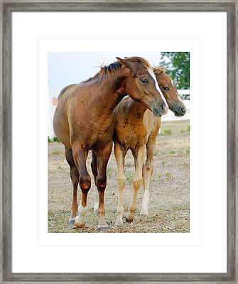 Wary Young Horses Framed Print