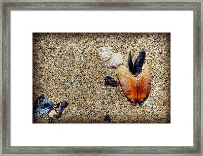 Washed Up Framed Print by Lisa Knechtel