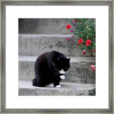 Washing Up Framed Print by Lainie Wrightson