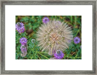 Washington Wildflowers Framed Print by Beverly Hanson