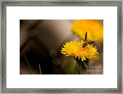Wasp And Flower  Framed Print
