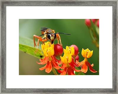 Framed Print featuring the photograph Wasp by Kathy Gibbons