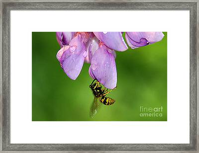 Framed Print featuring the photograph Wasp N Bloom by Jack Moskovita