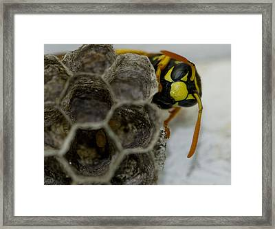 Wasp Nest Framed Print by Dean Bennett
