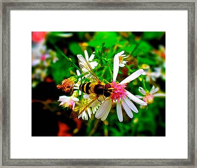 Wasp On Flower Framed Print by Andre Faubert