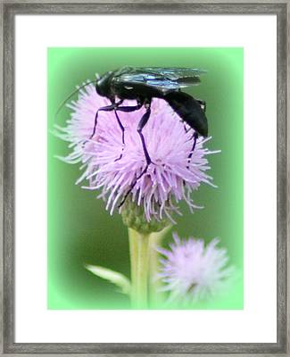Wasp On Lavender Wildflower  Framed Print by Maureen  McDonald