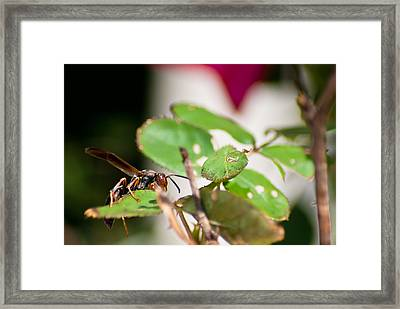 Wasp On Roses Framed Print by Jason Heckman