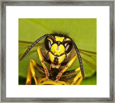 Wasp - Portrait Framed Print by Ronald Monong