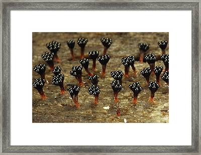 Wasps Nest, As Some Call Framed Print