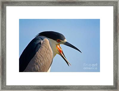 Wassup Framed Print by John Stanisich