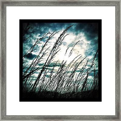 Wasteland Framed Print by Mark B
