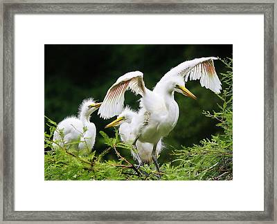 Watch And Learn Framed Print by Paulette Thomas