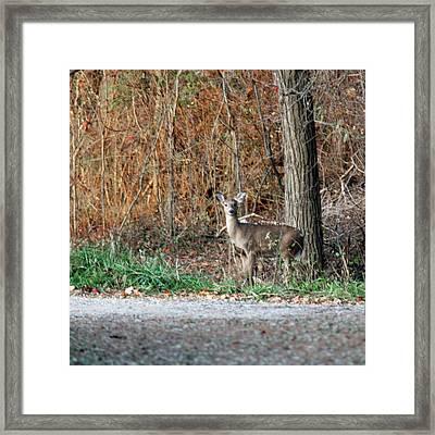 Watch Deer Framed Print by LeeAnn McLaneGoetz McLaneGoetzStudioLLCcom