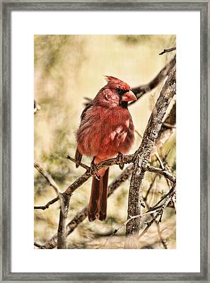 Watch Me Framed Print by Mike OBrien