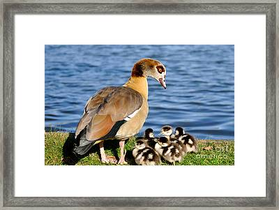 Watch Over You Framed Print by Lisa Williams