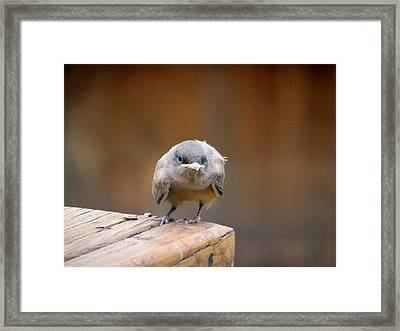 Watcha Lookin At.				 Framed Print by Margaret  Slaugh