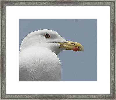 Watcher Being Watched Framed Print