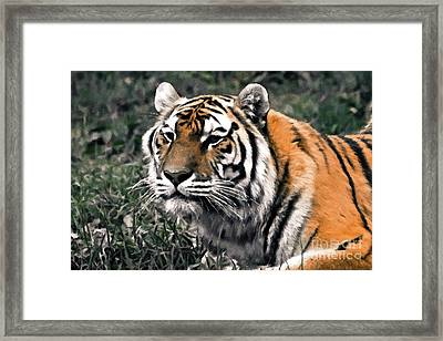 Watchful Bengal Tiger - Brush Stroke Framed Print by Darcy Michaelchuk