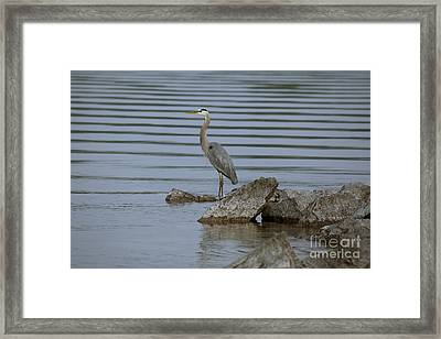 Framed Print featuring the photograph Watchful by Eunice Gibb