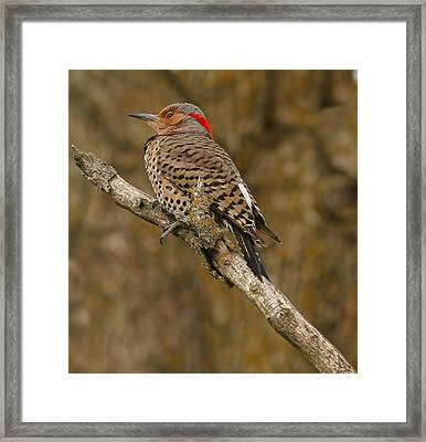 Framed Print featuring the photograph Watchful Eye by Elizabeth Winter