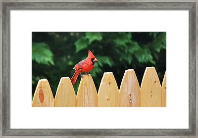 Watchful Father Framed Print by Mary Zeman