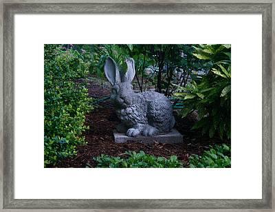 Watchful Rabbit Framed Print by Douglas Barnett