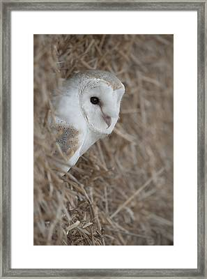 Watchfull Barn Owl Framed Print by Andy Astbury