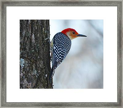 Framed Print featuring the photograph Watching by Brian Stevens