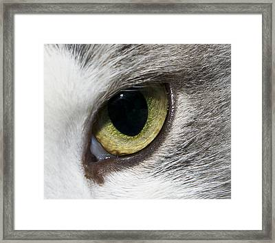 Framed Print featuring the photograph Watching by David Lester