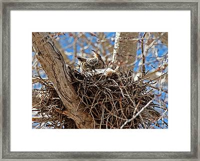Framed Print featuring the photograph Watching Me by Stephen  Johnson