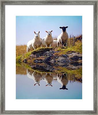 Watching Me Watching You Framed Print by Shane Bradley