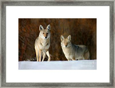 Framed Print featuring the photograph Watching by Mitch Shindelbower