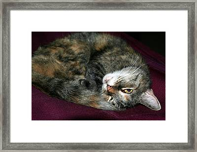 Framed Print featuring the photograph Watching On The Sly by Laurel Talabere