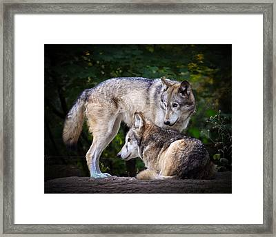 Framed Print featuring the photograph Watching Over by Steve McKinzie