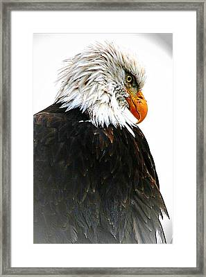 Watching Over You Framed Print by Carrie OBrien Sibley