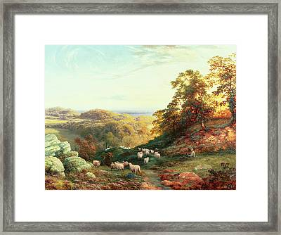 Watching The Flock Framed Print