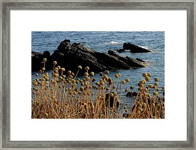 Framed Print featuring the photograph Watching The Sea 1 by Pedro Cardona