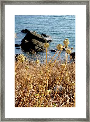 Framed Print featuring the photograph Watching The Sea 2 by Pedro Cardona